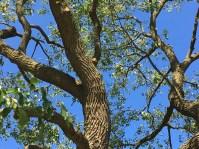 canalshores12-mulberryband_100916