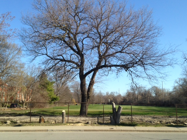canalshores12-mulberrybehind_041616