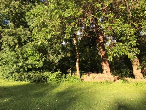 CanalShores12-Treelineleft_062616.JPG