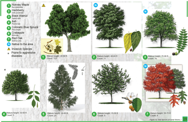 CanalShores-TreeInventory2.png