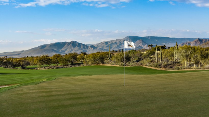 DesertForest1-GreenBack-DM.jpg