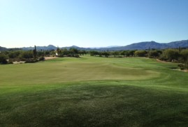 DesertForest1-Greenback