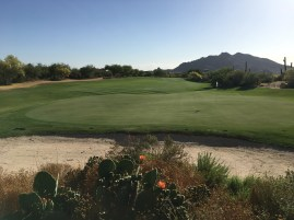 DesertForest11-GreenBack