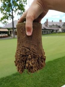 Green root depth in 2016