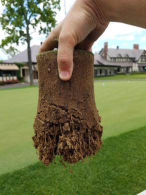 Green root depth in 2016