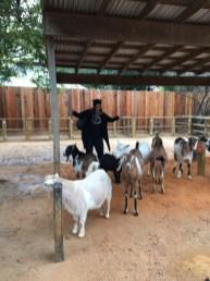 Ricki learned she was a goat whisperer.