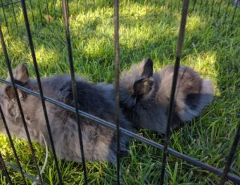 TRIBBLES... I mean, bunnies