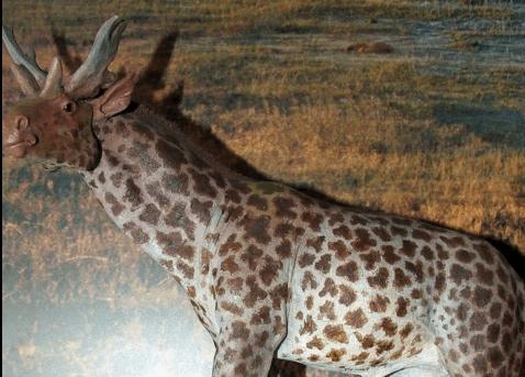Meet Sivatherium giganteum, the Prehistoric Giraffe-Moose!