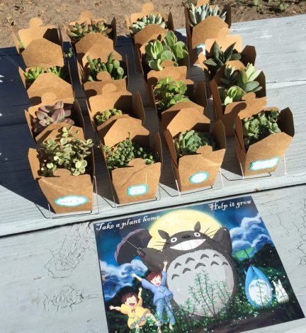 Plants serve as Totoro party favors. Photo by Ariane Coffin.