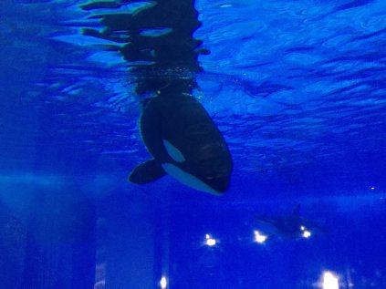 Shamu's underwater viewing area. Image: Dakster Sullivan