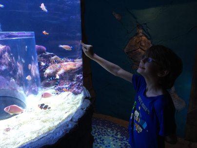I found Nemo! Image: Dakster Sullivan