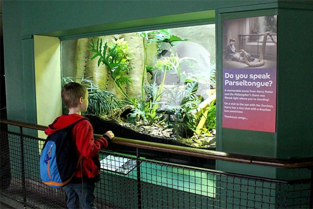 No Escapee Boa Constrictors in the Reptile House Today, Image: Sophie Brown