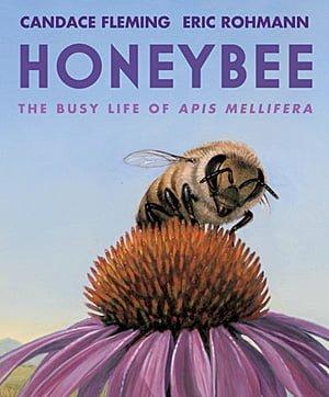 Honeybee, Image Neal Porter Books