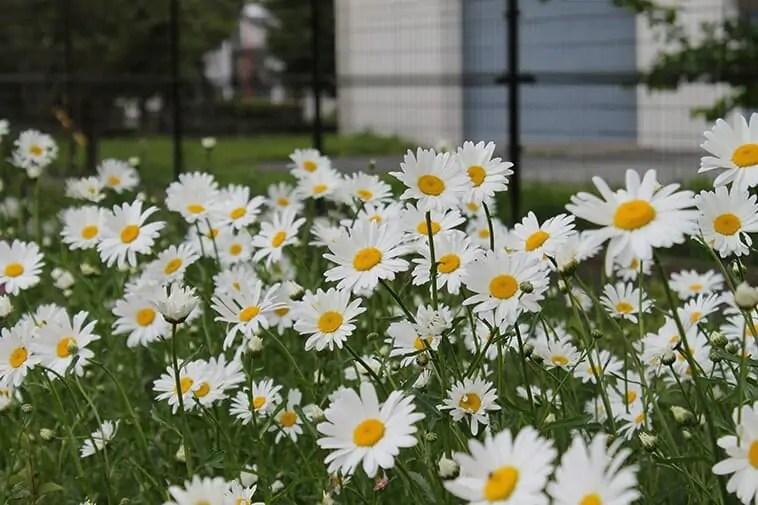 背景がボケた花の写真