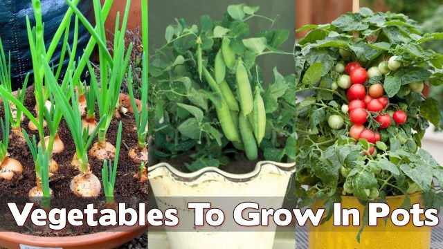 vegetable to grow inside house in pots