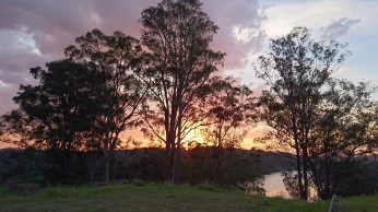 Sunset behind the gum trees