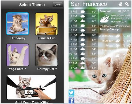 gatitos-y-el-clima