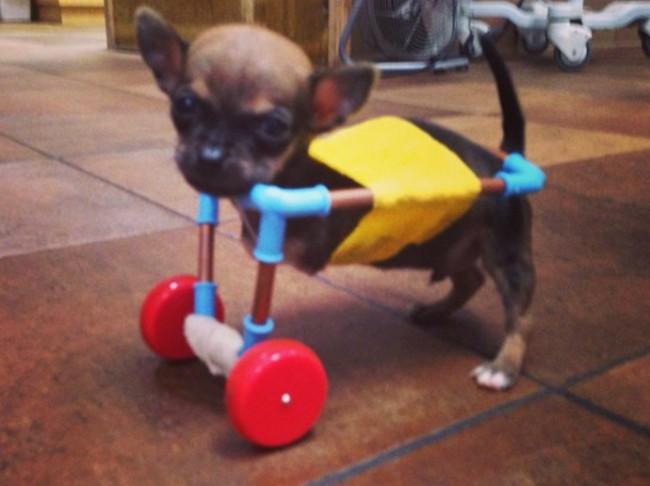 Primer carrito creado en la veterinaria