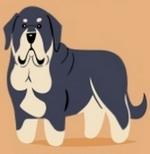 Conoce el origen geográfico de las razas de perros, incluidos los de América Latina y España