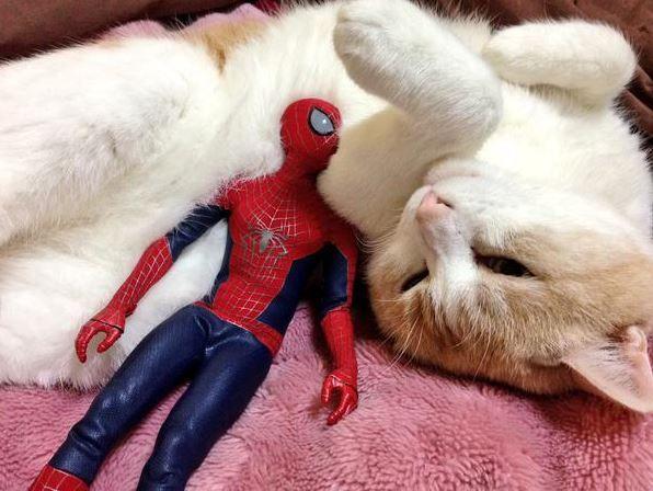 Spider Man Cuddling With Kitties