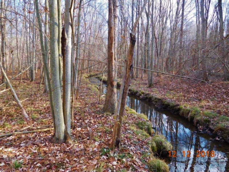 winter trees and brook for sale