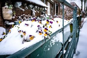 EMN winter, opijnen, sneeuw, winter