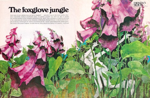 '75 EM The Foxlove Jungle
