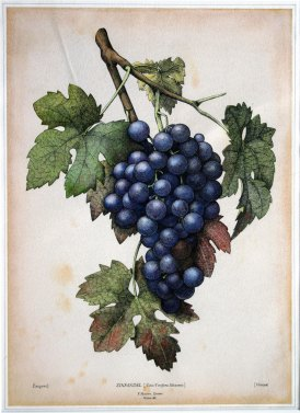 9-paul-masson-grapes-5854