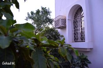 Palm tree and a House- Oman