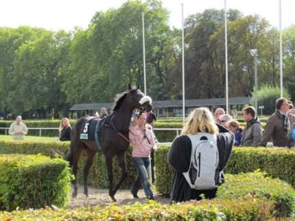 Schöne Pferde