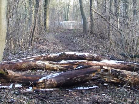 Alte Bahnstrecke im Wald