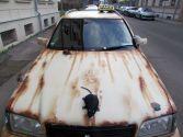 Vorzeigeratte Fake-Taxi