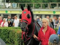 Dieses Pferd könnte für Sternburg starten