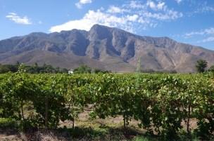 Weingut Leipzig in Südafrika
