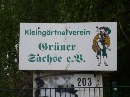 Grüner Sachse