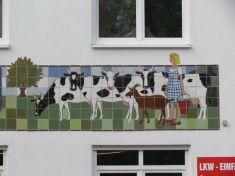 Kühe in der Breitenfelder (Käsehaus)