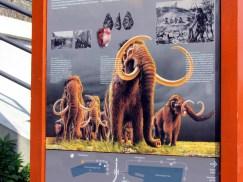 Hier lebten früher Mammuts