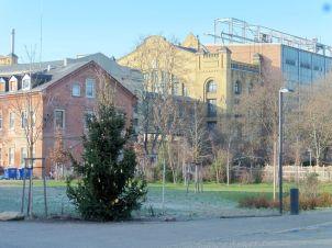 Blick durchs Tor der Karl-Schubert-Schule