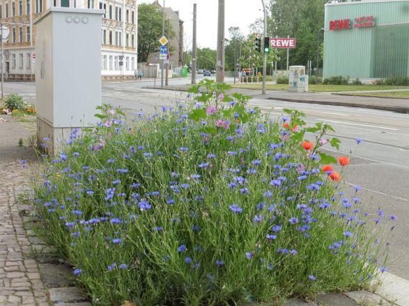 Blühende Baumscheibe in der Gorkistraße