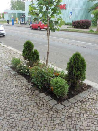 Bepflanzte Baumscheibe in der Gorkistraße