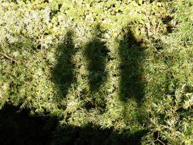 Drei Leute, zig Lokale