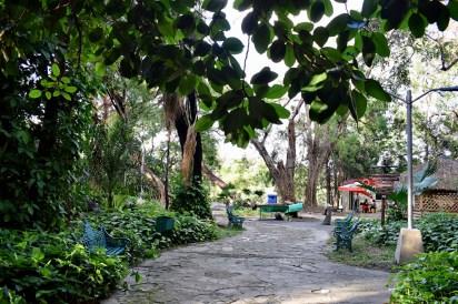 Havanna Forest...