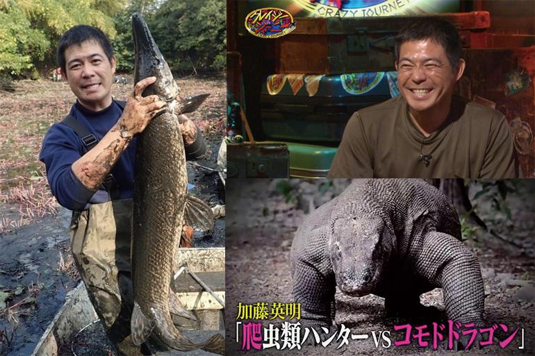 クレイジージャーニー 加藤英明 爬虫類ハンター