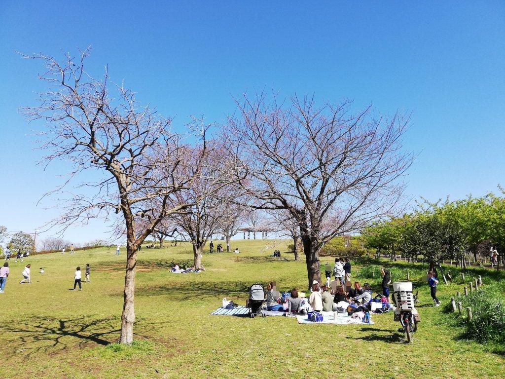 江戸川区葛西のなぎさ公園の丘