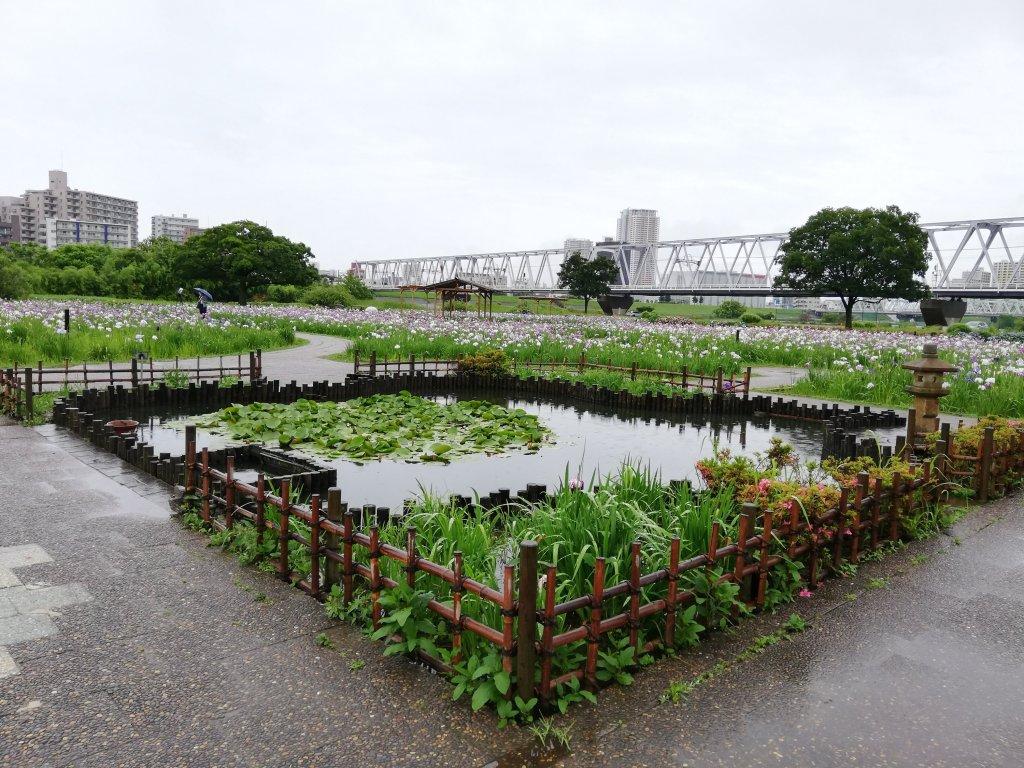 江戸川区の小岩菖蒲園の池