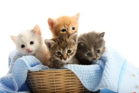Разведение кошек что нужно знать и с чего начать