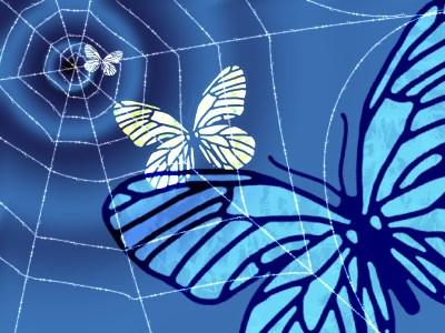 蝶が蜘蛛の巣に・・・。落ちていく・・・。