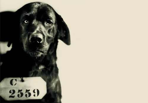 Animal Fact - Dog goes to jail