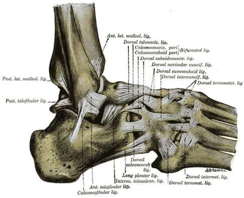 Sprunggelenk Arthrose Gelenkerhalt Im Fusszentrum Zfs Www Gelenk Doktor De