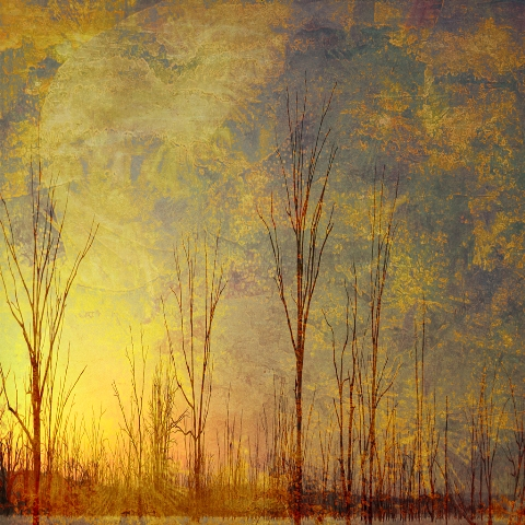 Frosted Trees - Square Illustrative composite photography by Deb Gartland